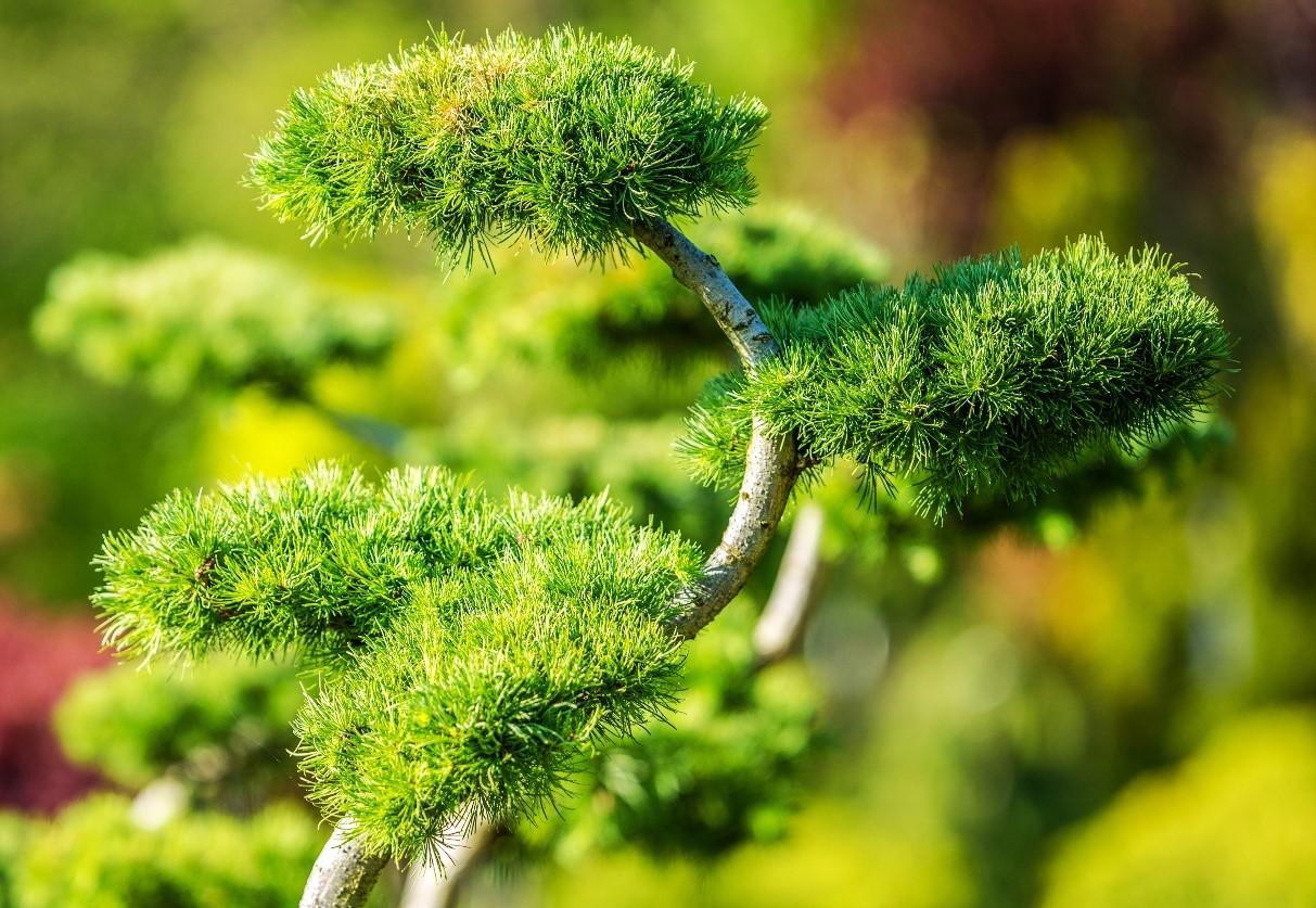 Kies jouw ideale boom